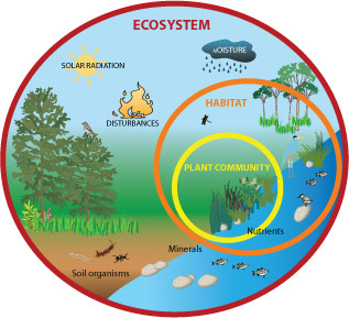 ecosystem.png