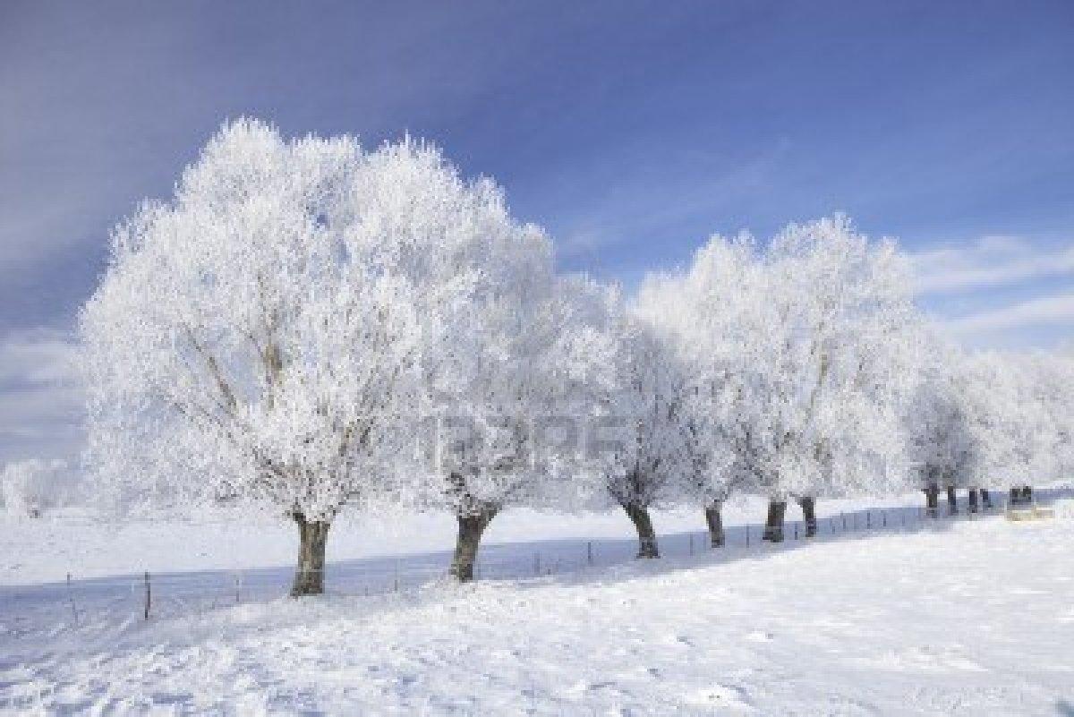 frosty trees.jpg