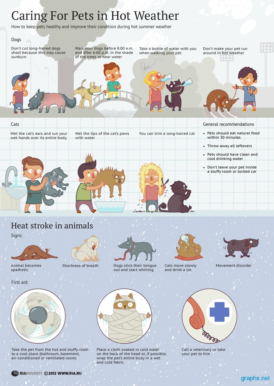 heatstroke-in-animals.jpg