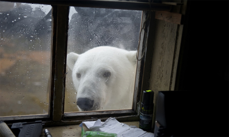 polar-bear-window.jpg